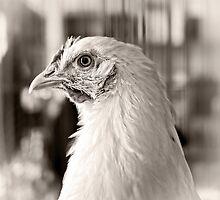 Prize Winning Hen by Edward Fielding