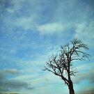 Alone by Gary Murison