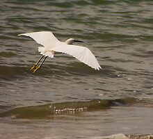 Seagull by Sciuridae