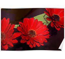 Red gerbera daisies Poster