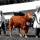 Northumberland Show 2012 by Andrew Pounder