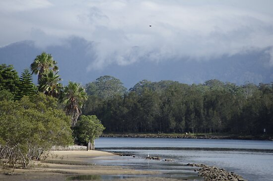 Birdlife on the Urunga Estuary by Clare Colins
