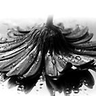Flower #2 in Black and White. by Dipali S