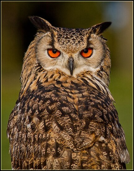 Eagle Owl by alan tunnicliffe