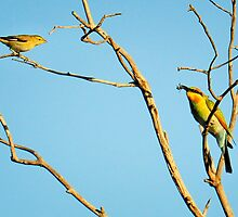 'Have you got a spare one for me?' thornbill and bee-eater by nadine henley