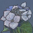 Hydrangea by MagsWilliamson