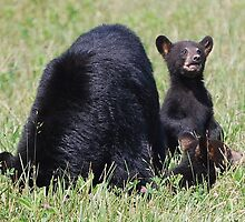 Black Bear Cub and Momma by Kelly Kahl