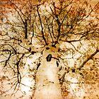 Aspen Dream by Dianne Phelps