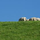 Sheep by Lugburtz