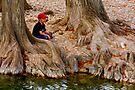 Fishing Among the Cypress by Paul Wolf