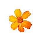 Orange Yellow Flower Print On White by DreamByDay