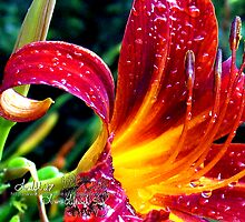 raindrops on lillies  by LoreLeft27