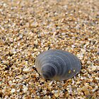 Sea Shell on Bejeweled Sands by Conor Donaghy