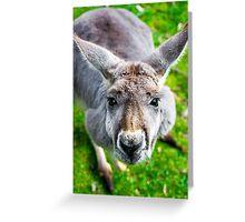 Face Off With A Kangaroo. Greeting Card