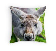 Face Off With A Kangaroo. Throw Pillow