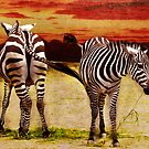 The Zebras by AD-DESIGN