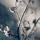 light of winter...five~ by Brandi Burdick