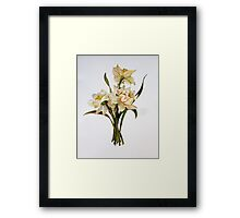 Double Narcissi Framed Print