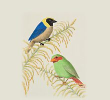 Golden-collared Tanager And Grass-green Tanager by jkartlife