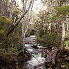 Kia Ora River - Overland Track Tasmania by Ron Finkel