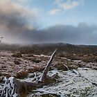 Snow on the overland Track by Ron Finkel