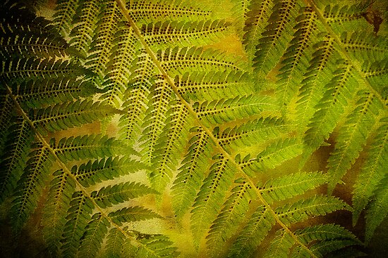 Bush Ferns by Robyn Carter
