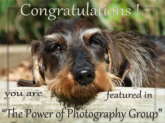 "Group Banner - ""The Power of Photography"" by Bine"