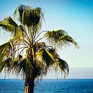 The Palm Tree Island by Chris Cardwell