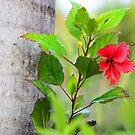 Wild Flower by Ticker