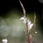 Grass by MattBlanco
