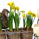 Easter eggs and daffodils by 7horses
