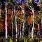 Birch Grove Spiral Color by Wayne King