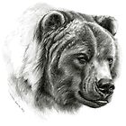 Brown Bear G2012-054 by schukinart