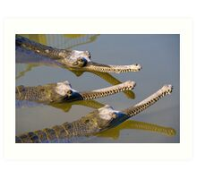 Conspiracy crocodiles Art Print