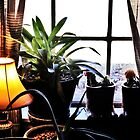 Window Plants 1 by jmkay9876