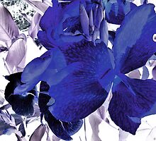 Blue Canna Lily by SRowe Art