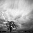 The Sky is Falling ... The Sky is Falling  by Photo-Bob
