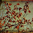 Red leaves by Nadeesha Jayamanne