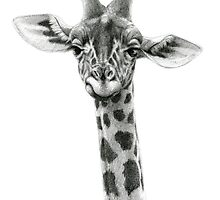 Young Giraffe G2012-053 by schukinart
