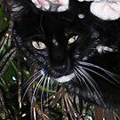 Silly Kitty by Rhonda Strickland