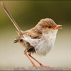 Little Wren by Helenvandy