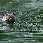 Otter by David Barnes