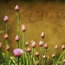 Chives by JCoePhotography