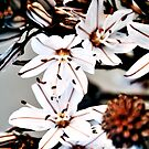 Bloom case by TaniaLosada