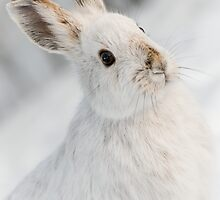 Rabbit Ears by Charles Dillane