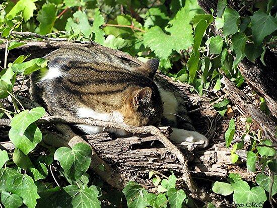 Tree Cat House by Loree McComb
