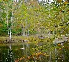 Unami Creek in Autumn Splendor - Green Lane PA by MotherNature