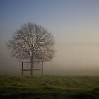 Tree in the mist by Michelle Hardy  Photography