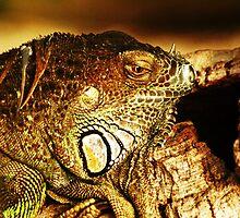 Green Iguana by Maria Tzamtzi