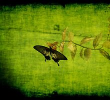 Green by Maria Tzamtzi